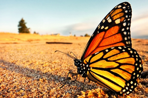 Creating Realities:  Butterfly Dreaming